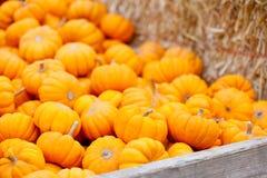 Pile of pumpkins Stock Photos
