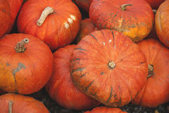 Pile of pumpkins Royalty Free Stock Photography