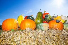 Pile of pumpkins in the sun Stock Photo