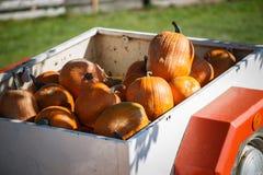 Pile of pumpkins Royalty Free Stock Photos
