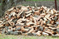 A pile of punctured firewood. Harvested wood for the royalty free stock image
