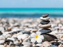Pile équilibrée de pierres de zen avec la fleur de plumeria Image libre de droits