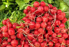 Pile of radishes. The radish (Raphanus sativus) is an edible root vegetable of the Brassicaceae family that was domesticated in Europe in pre-Roman times. They Stock Photo
