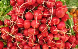 Pile of radishes. The radish (Raphanus sativus) is an edible root vegetable of the Brassicaceae family that was domesticated in Europe in pre-Roman times. They Royalty Free Stock Image