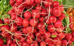 Pile of radishes Royalty Free Stock Image
