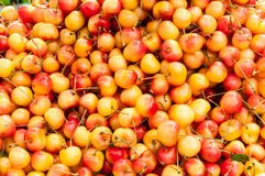 A pile of rainier cherries. royalty free stock image