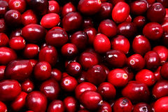Pile of Raw Cranberries. Up Close Stock Image