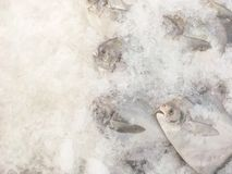Closeup pile of raw freeze dead fish for cook in tray with ice textured background with copy space. Pile of raw freeze dead fish for cook in tray with ice Royalty Free Stock Photography