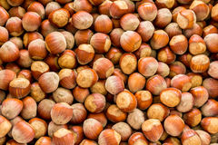 A pile of raw hazelnuts in their shell Stock Image