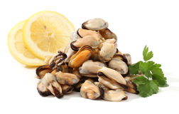 Pile of raw mussels Royalty Free Stock Image
