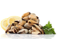 Pile of raw mussels. Over white Royalty Free Stock Images