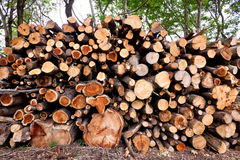 Pile of raw pine wood logs Stock Photos