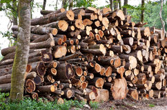 Pile of raw pine wood logs Stock Photography