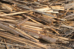 Pile of raw planks of coniferous wood Stock Image