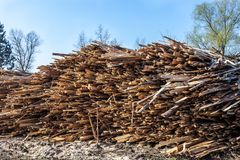 Pile of raw planks of pine wood Royalty Free Stock Photos
