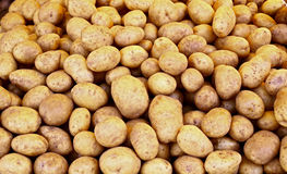 Pile of raw potatoes Stock Image