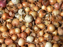 Pile of raw ripe onions Royalty Free Stock Images