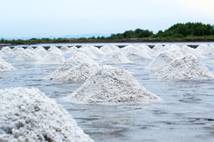 Pile of raw salt at salt field. salt agriculture before ssalt saturation process in factory. Imafe for background, copy space and backdrop Royalty Free Stock Image