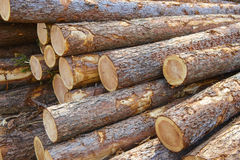 Pile of raw wood Royalty Free Stock Image