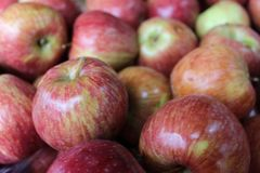Pile of red apples at the market Stock Photography