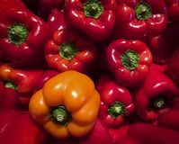 Orange and red bell peppers Stock Images