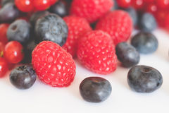 Pile of red and blue berries closeup Royalty Free Stock Photo