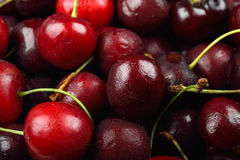 Pile of red cherries with drops of water on them Royalty Free Stock Images