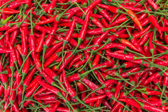 A pile of red chilli peppers Royalty Free Stock Image