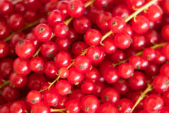 Pile of red currant berries - fruit background. Red currant berries - fruit background royalty free stock images