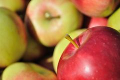 Pile of red, green, yellow ripe apples Royalty Free Stock Photography