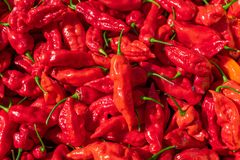 Pile of Red Hot Peppers stock photography