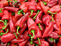 Pile of red peppers Royalty Free Stock Image