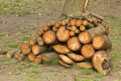 Pine Firewood Royalty Free Stock Images