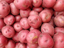 Pile of Red Potatoes Royalty Free Stock Images