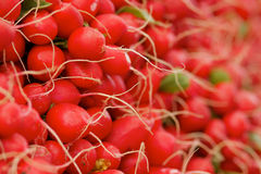 Pile of red radishes. At the farmers market Stock Images