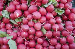 Radishes. A pile of red radishes at weekly market Royalty Free Stock Photography