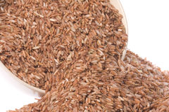 Pile of Red Rice  Stock Images