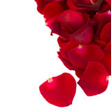 Pile of red rose petals close up Royalty Free Stock Images