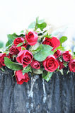 Pile of red roses Royalty Free Stock Photography