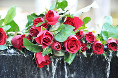 Pile of red roses Royalty Free Stock Photo