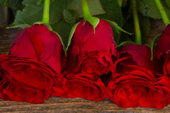 Pile of red roses Royalty Free Stock Images