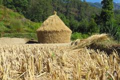 Pile of rice straw looking like a house drying under the Nepalese sun, Num, Nepal stock photos
