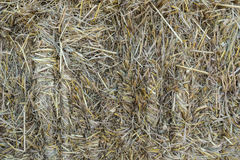 Pile of rice straw texture. Pile of rice straw from rice filed,texture royalty free stock photography