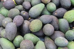 Pile of ripe avocado pears royalty free stock image