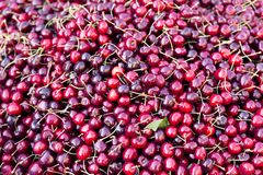 Pile of ripe cherries. Fruits and vegetables at a farmers market.  royalty free stock photos