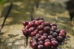 A pile of ripe cherries on a wooden surface. Ripe cherry. Fresh juicy berries on the wooden surface. Healthy summer fruits royalty free stock images