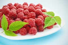 A pile of ripe raspberries on a beautiful blue background stock image