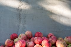 Pile of ripe red apples over gray rought cement wall background with copyspace for your design Stock Image