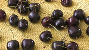 Pile ripe red fresh cherries lie on a burlap background stock video