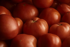 Pile of ripe red tomatoes filling the frame Royalty Free Stock Photo